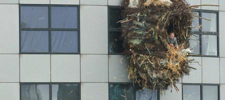 Benjamin Verdonck's Giant Nest in Rotterdam