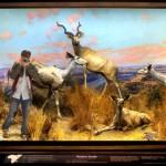UNION LA 'Into The Wild' Lookbook 4