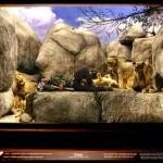 UNION LA 'Into The Wild' Lookbook 7