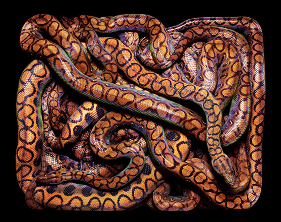 GuidoMocfico_AllThatSlithers_img-01