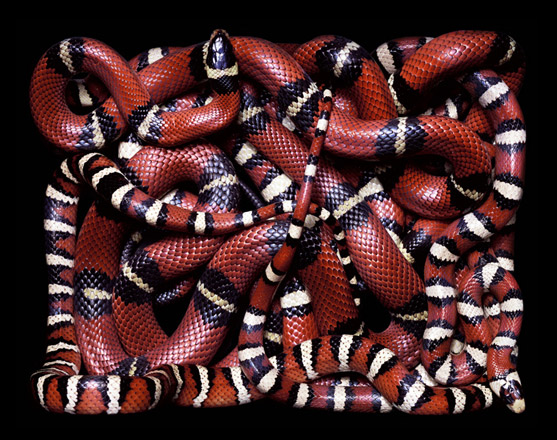 GuidoMocfico_AllThatSlithers_img-02