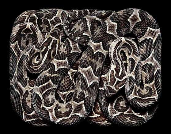 GuidoMocfico_AllThatSlithers_img-03