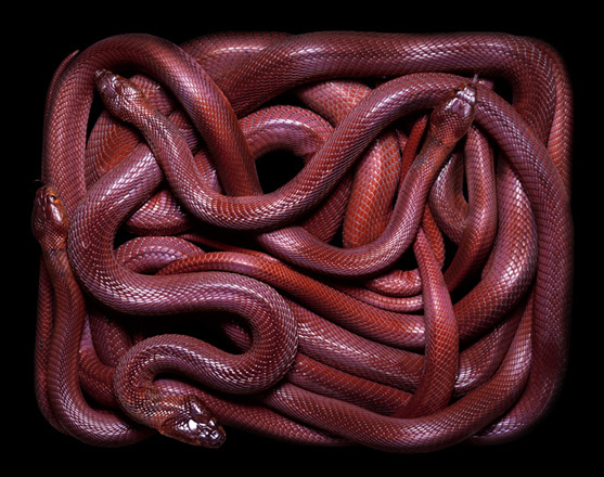 GuidoMocfico_AllThatSlithers_img-04