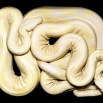GuidoMocfico_AllThatSlithers_img-05