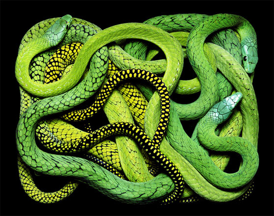 GuidoMocfico_AllThatSlithers_img-06