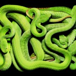 GuidoMocfico_AllThatSlithers_img-08