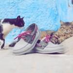 Cool Cats x Sebago Docksides 2010 02