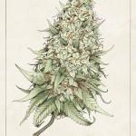 Tricia Kleinot's Snoop Dogg Tour Poster 03