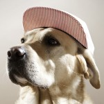 thomas-hoedholt-dogs-with-caps-02
