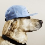 thomas-hoedholt-dogs-with-caps-04