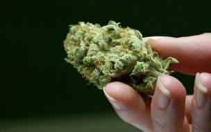 The-Cannabis-Market